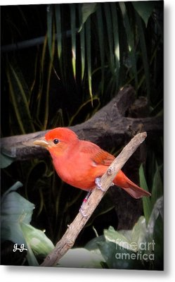 Red Bird Pose Metal Print by Geri Glavis