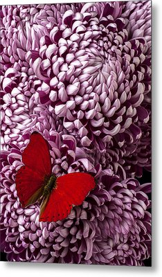 Red Butterfly On Red Mum Metal Print by Garry Gay