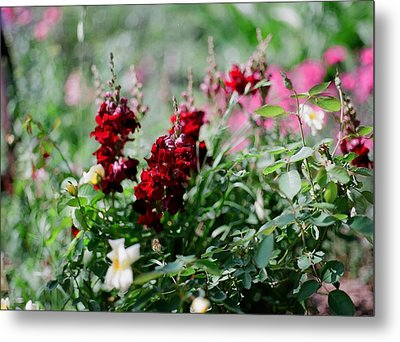 Red Flowers On Film Metal Print