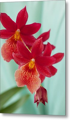 Red Orchids On Blue Metal Print by Bonita Hensley