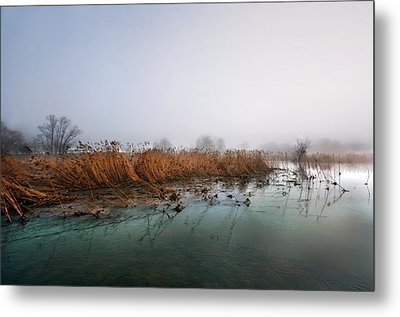 Metal Print featuring the photograph Reeds by Graham Hawcroft pixsellpix