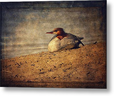 Relaxing Under The Sun  Metal Print by Maria Angelica Maira