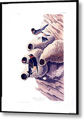 Republican Or Cliff Swallow Metal Print by MotionAge Designs