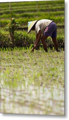Metal Print featuring the photograph Rice Farmer - Bali by Matthew Onheiber