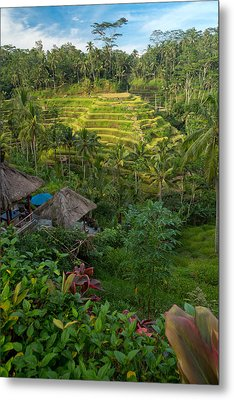 Metal Print featuring the photograph Rice Terraces - Bali by Matthew Onheiber