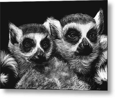 Ringtail Lemurs Metal Print by Heather Ward