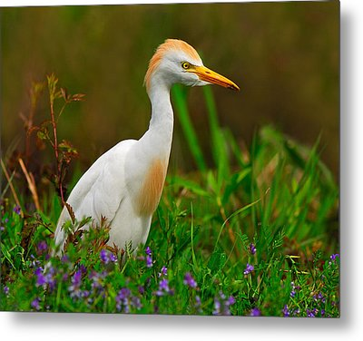 Roaming Through The Field Metal Print by Tony Beck