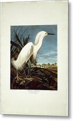 Robert Havell After John James Audubon, Snowy Heron Metal Print