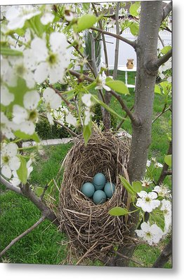 Metal Print featuring the photograph Robins Egg Nest by Margaret Newcomb