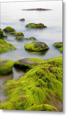 Rocks Or Boulders Covered With Green Seaweed Bading In Misty Sea  Metal Print by Dirk Ercken
