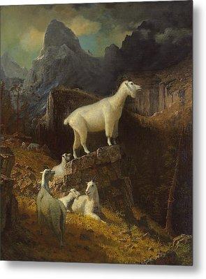 Rocky Mountain Goats Metal Print by Albert Bierstadt