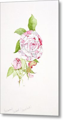 Rosa Ferdinand Pichard Metal Print by Sarah Creswell