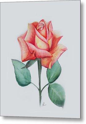 Rose 4 Metal Print by Nancy Edwards