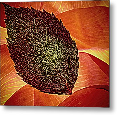 Rose Foliage On Rose Petals Metal Print by Chris Berry
