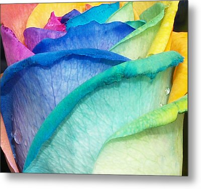 Metal Print featuring the photograph Rose by Haleh Mahbod