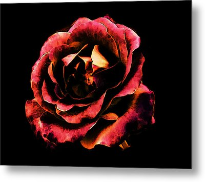 Metal Print featuring the photograph Rose Red by Persephone Artworks