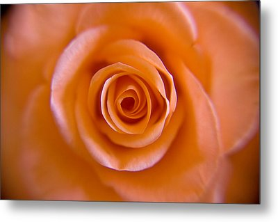 Rose Spiral Metal Print by Kim Lagerhem