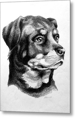 Rottweiler Devotion Metal Print by Patricia Howitt