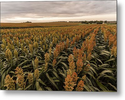 Rows Of Color Metal Print by Scott Bean