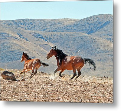 Running Free Metal Print by Lula Adams