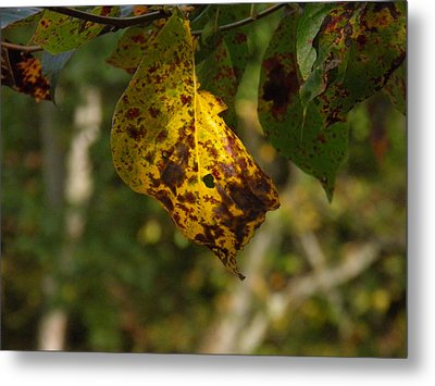 Metal Print featuring the photograph Rusty Leaf by Nick Kirby