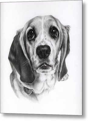 Metal Print featuring the drawing Sadie by Natasha Denger