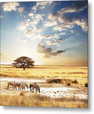 Safari Metal Print by Boon Mee