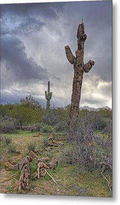 Saguaro Ending Metal Print by Darlene Bushue
