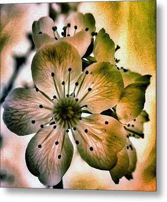 Sakura - Cherry Blossom Metal Print by Marianna Mills