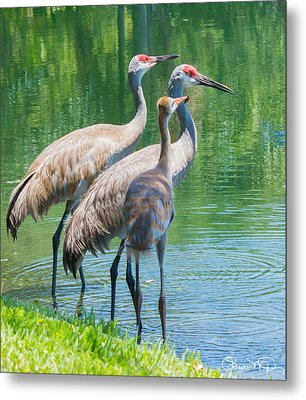 Mom Look What I Caught Metal Print by Susan Molnar