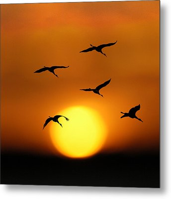 Sandhill Sunset Metal Print
