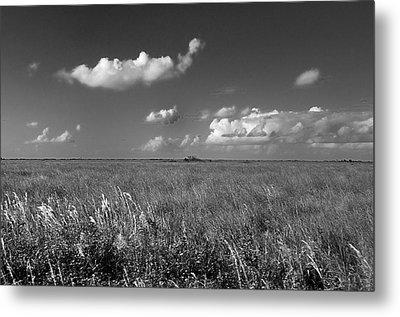Sawgrass Prairie  Metal Print by Andres LaBrada