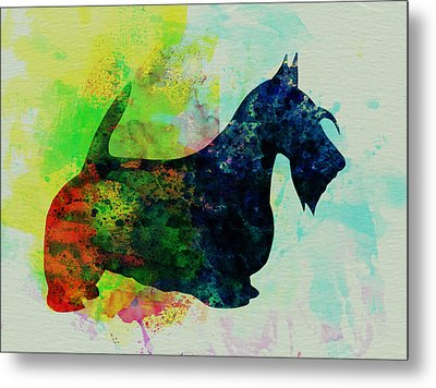 Scottish Terrier Watercolor Metal Print