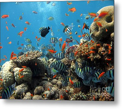 Sea Life Metal Print by Boon Mee