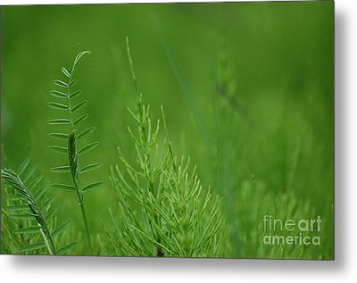 Metal Print featuring the photograph Sea Of Green by Bianca Nadeau