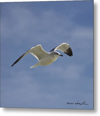 Metal Print featuring the photograph Seagull Flight I by Kathy Ponce