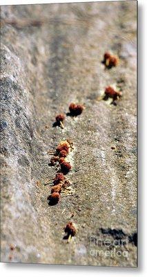 Seeds On Stone Metal Print by Kaleidoscopik Photography