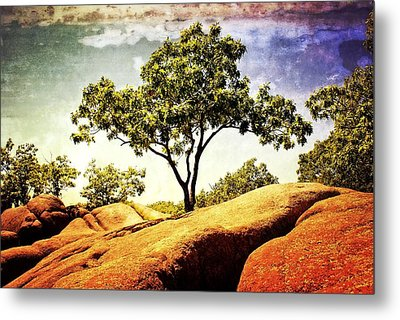 Sentinal Tree Metal Print by Marty Koch