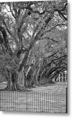 Sentinels Monochrome Metal Print by Steve Harrington