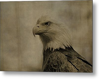 Sepia Bald Eagle Portrait Metal Print by Dan Sproul