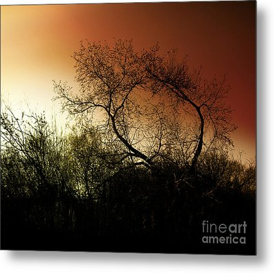 Shadowlands 9 Metal Print by Bedros Awak