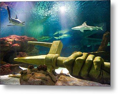 Shark Tank Trident Metal Print by Bill Pevlor