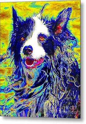 Sheep Dog 20130125v1 Metal Print by Wingsdomain Art and Photography