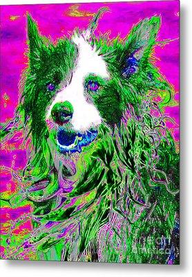 Sheep Dog 20130125v2 Metal Print by Wingsdomain Art and Photography