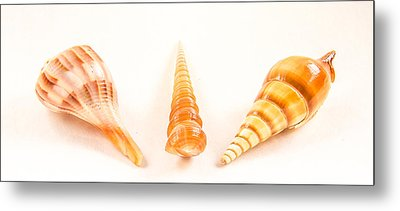 Shell Trio Metal Print by Jean Noren