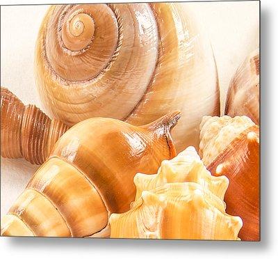 Shells Metal Print by Jean Noren