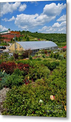 Shrubbery At A Greenhouse Metal Print by Amy Cicconi