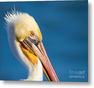 Metal Print featuring the photograph Sideview by Dale Nelson