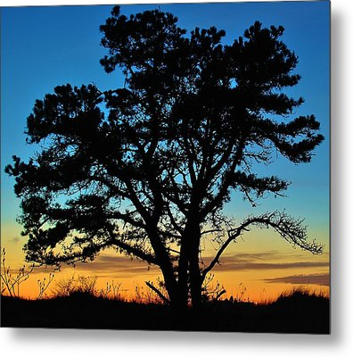 Metal Print featuring the photograph Silhouette by Paul Noble