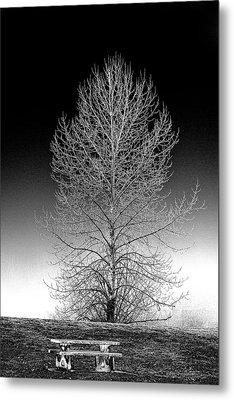 Silver Birch Metal Print by Phil Dyer